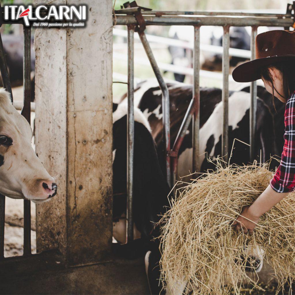 italcarni carne bovina